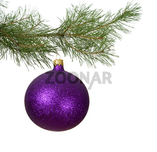 christmas branch with violet bauble