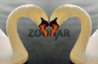 Zwei Schwaene The swans - symbol of grace