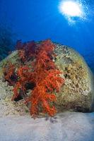 Korallen in Lagune