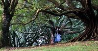 Verliebt in Auckland