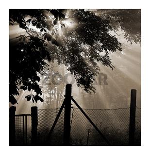 Morgen_Nebel