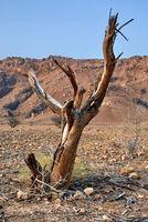 Toter Baum in Geröllwüste