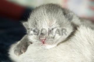 4 tage altes Katzenbaby, newborn, kitten, catbaby, blind, blindes, neugeboren, neugeborenes, catbaby, cat-baby