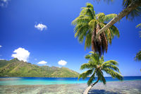 Moorea palm 2.jpg