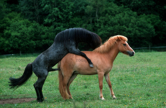filme geschlechtsverkehr pferd geschlechtsverkehr