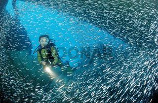 Schiffswrack Patricia, Taucher,  Punta Cana, Karibik