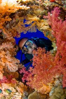 Taucher im Korallenriff