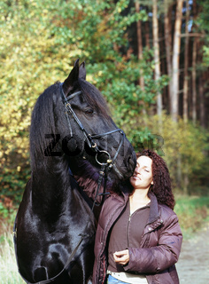 Friesian Stallion (male horse) / Friesenhengst