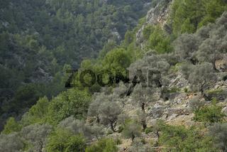 Mallorca, Berge