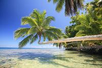 Moorea palm.jpg