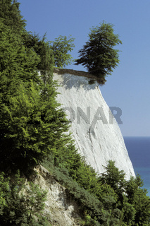 Chalk cliffs, Kreidefelsen