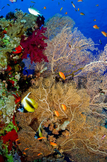 Leben am Korallenriff