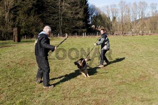 Deutscher Schaeferhund, German Shepherd Dog,