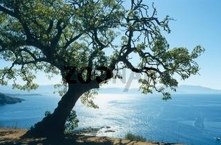 Corse, Korsika, France, Frankreich