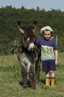 Esel / Donkey