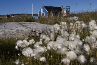 Rotebay, Groenland, Greenland