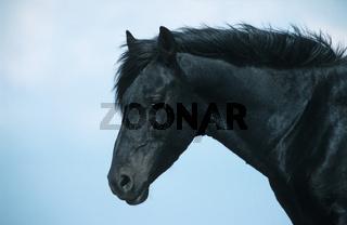 Esperia Pony