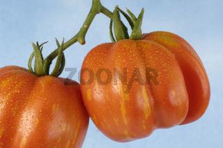 Tomatoes, Lange grosse Kubanische, Solanum lycopersicum, Tomaten, Lange grosse Kubanische