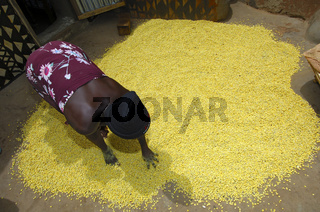 Trocknung von Nere-Samen, West Afrika