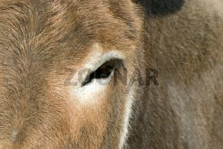Esel auf der Weide -