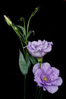 Blumenranke