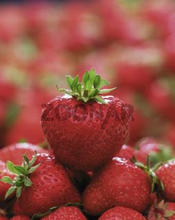 Erdbeere, fragaria, strawberry, fresa, sammelnussfruechte, obst, heilpflanze, nahrungsmittel,