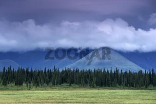 denali nationalpark and preserve, alaska interior, usa,