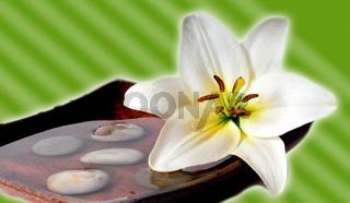 Wellness Blüten