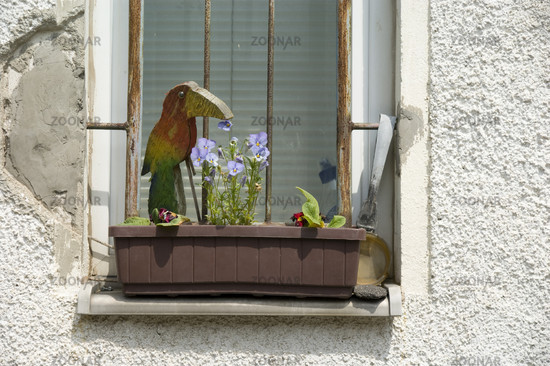 Foto Fenster mit Blumenkasten und Patina, Window boxes Bild ...