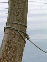 Seil, Strick um einen Baum, Halt, festgebunden