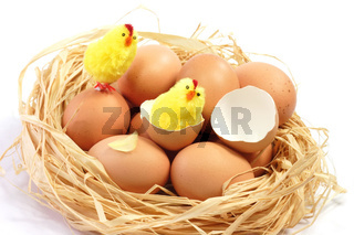 Osterkueken - Toy Chicks