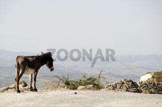 Esel im albanischen Hochland