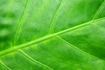 Green tropical leaf background