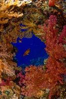 Loch im Korallenriff