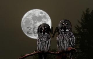 Eulen in der Nacht