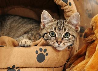 Kitten in a bed