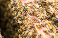 busy bees on beehive