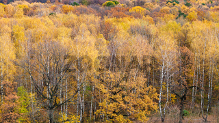 above view of yellow woods in urban park in autumn