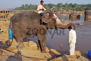 Elefant segnet Inder am Tugabhadra Fluss in Hampi, Südindien, Asien