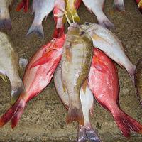 Frischer Fisch auf dem  Marktplatz in Viktoria Seychellen