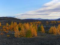Herbstlandschaft im Lavafeld nahe dem See Myvatn in Island