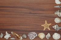 Muschelrand auf Holzhintergrund