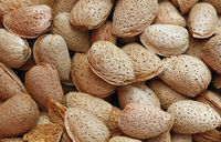 Whole raw almond nuts with shell close up