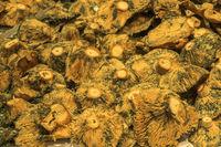 Mushrooms For Sale, Indoor Market, Valencia, Spain