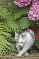 Kätzchen mit Hortensienblüte