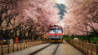 train in gyeonghwa station