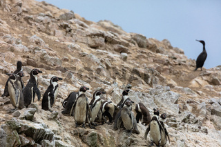 Ballestas Islands, Perù