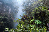 Mountain rainforest, near the waterfall Pailon del Diablo in the Andes. Banos. Ecuador