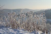 Pflanzen mit Eiskristallen