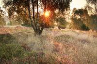 sunshine on meadow with birsh trees